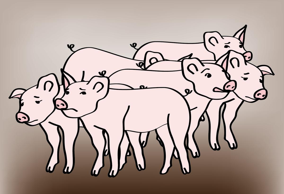 fünf kleine rosa Schweine