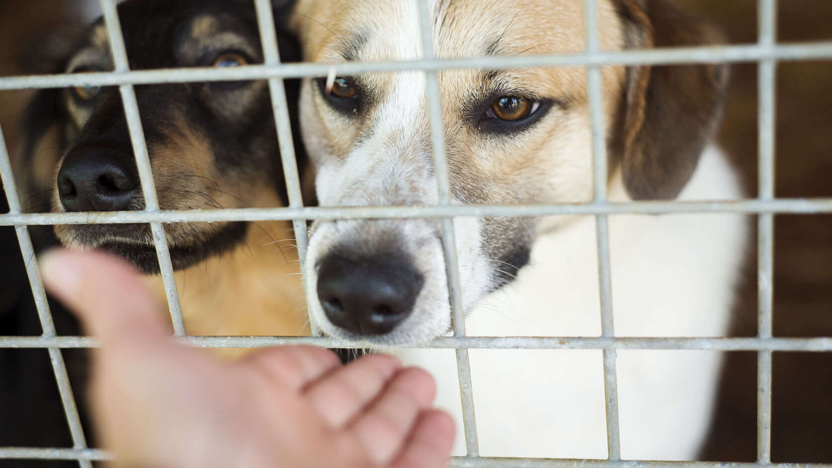 zwei Hunde hinter einem Gitter und eine Hand, die einen der Hunde streichelt